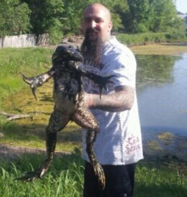 11 pound bullfrog