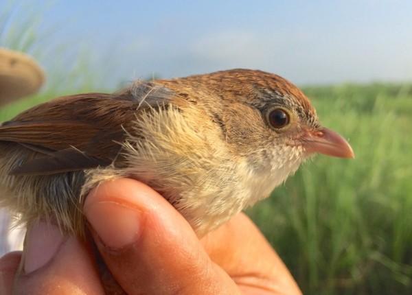 Extinct bird animal not extinct