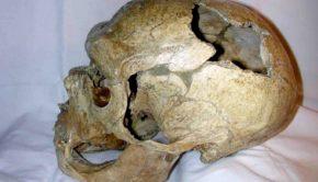 Fossil skull Neanderthals