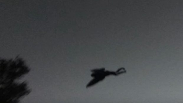 Picture of mothman